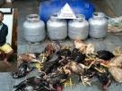 """Ladrão que roubou galinhas e botijões de gás dá 'chilique' na delegacia: """"Quero ser julgado no STF�"""