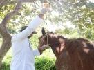 Animal arrastado por caçamba é resgatado e recebe cuidados médicos