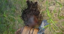 Itapebi:corpo de Adolescente Itapebiensse foi encontrado com o rosto queimado em Itagimirim
