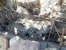 Jaguatirica é resgatada após ficar presa dentro de galinheiro na Bahia
