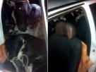 Homens são presos em flagrante com quatro vacas furtadas dentro de Uno