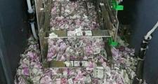 Ratos destroem R$ 66 mil em caixa eletrônico