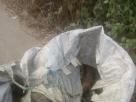 Corpo é encontrado dentro de saco; pode ser de jovem desaparecido